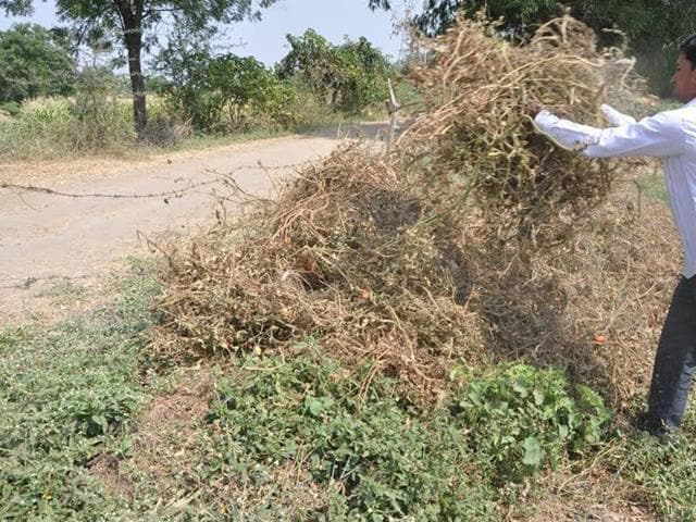 vegetable crop,whitefly infestation,plight of farmers in MP