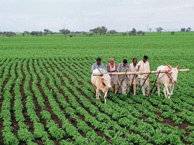 India has decided to stay firm when it comes to protecting the interest of the farmers of the country against the World Trade Organisations regulations.