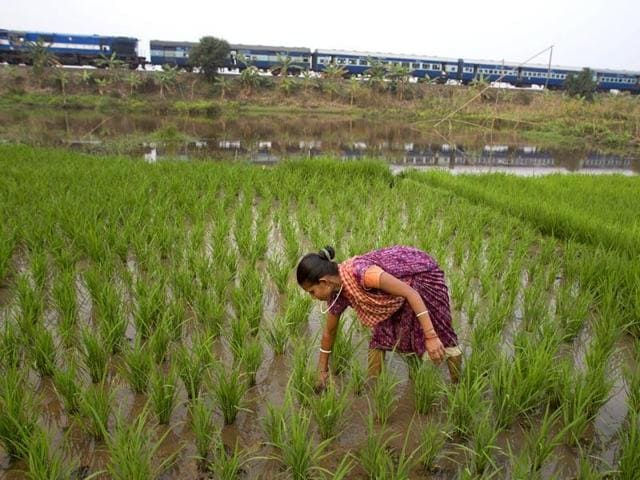 crop loss in MP,crop insurance scheme in MP,officers assess crop damage in MP