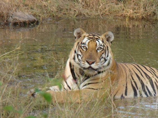 Environmentalists have said the adverse impact of the river link project on the Panna Tiger Reserve has been ignored.