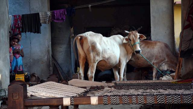 Shimla,Nahan,Vishwa Hindu Parishad