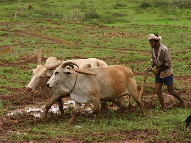 Shivraj Singh Chouhan,farmer suicide in MP,sharecroppers