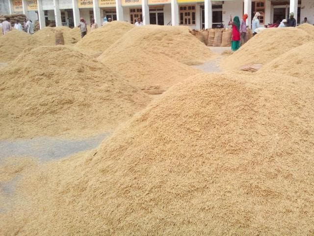 falling prices of Basmati paddy,basmati rice farmers in Madhya Pradesh,paddy procurement prices