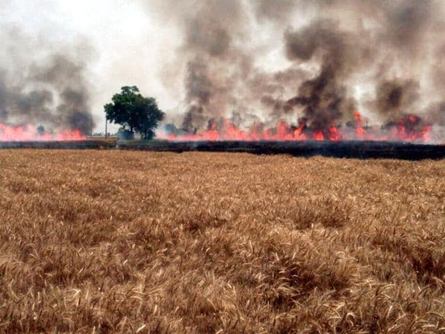 The farmers have been burning stubble despite ban on such a practice