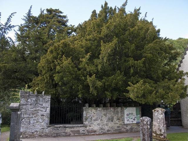 Oldest tree,Sex change,Britain