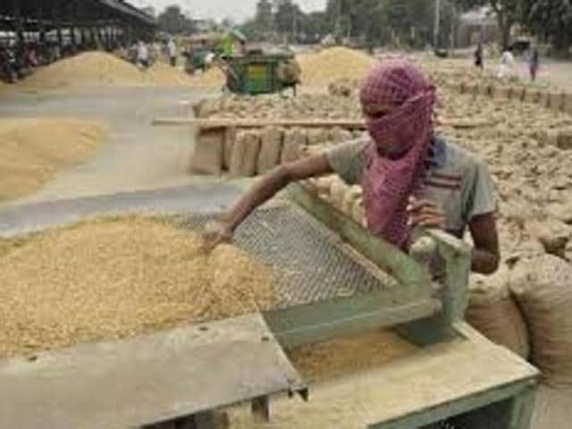 Punjab is eying to procure 137 tonnes of paddy this year as against 118 tonnes procured in 2014. The Punjab government has made payment of Rs 9,428 crore to the farmers for the procured paddy crop.(HT Photo)