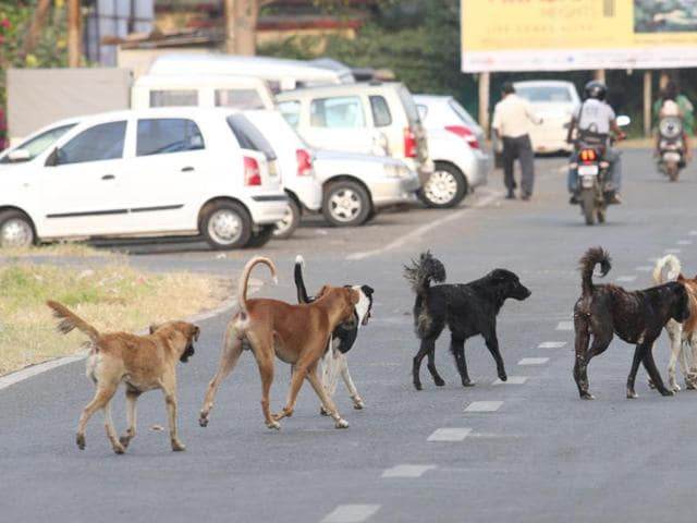 threat of stray dogs in Bhopal,canine terror in Bhopal,people bitten by stray dogs in Bhopal