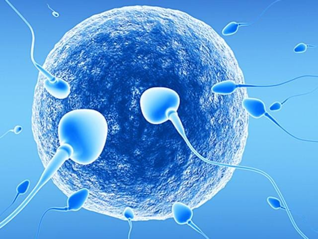 Sperms,Sperm donor,Fertility