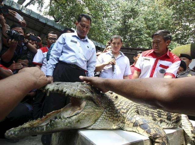 The head of the Indonesia's National Narcotics Board Budi Waseso (L) looks at a crocodile during a visit to a crocodile farm in Medan, North Sumatra. When Indonesia's anti-drugs czar announced plans to guard a death-row prison island with crocodiles, the government rushed to explain that it was just a joke.