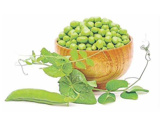 Peas,Punjab,Haryana