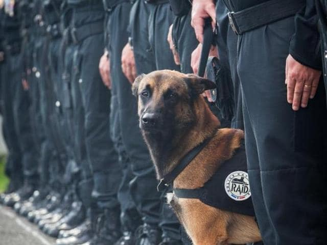A representative photo of a dog used by France's  RAID anti-terror unit tweeted by the National Police.