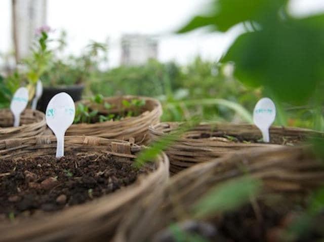 Urban gardening,HT48Hours,iKheti