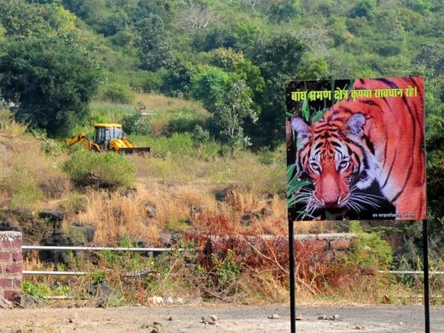 Bushes near the road in Kaliasot area being burnt so that tigers don't stray close to the roads.