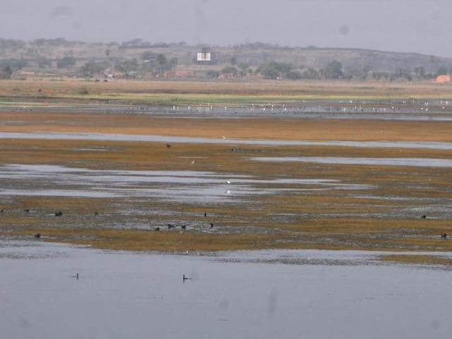 Indore,Sirpur Lake,important bird area