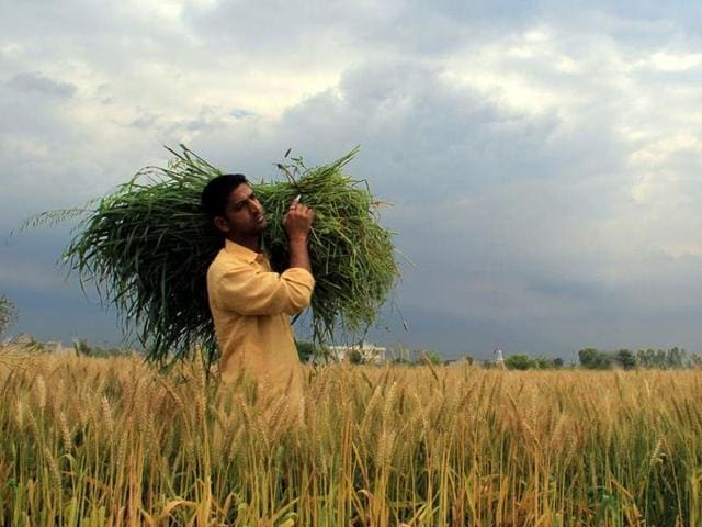 Drones, mobiles, internet: How Indian farms are going hi-tech