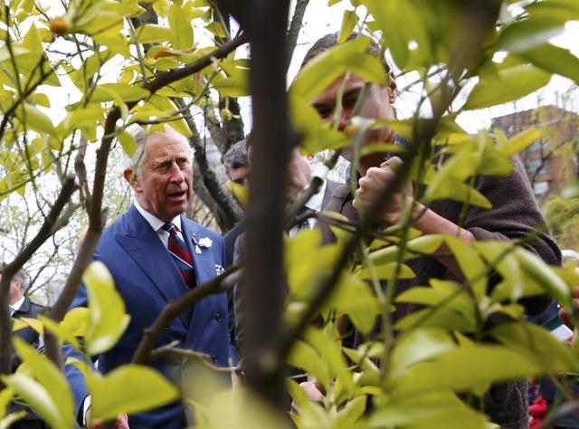 Prince Charles,Syria war,Islamic State