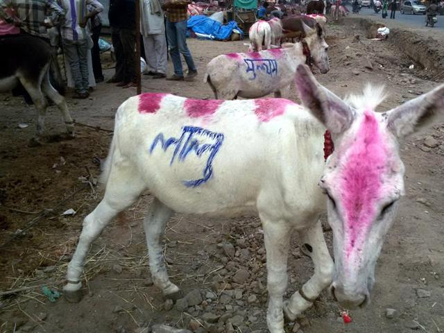Donkeys with name of politicians on sale at a fair in Ujjain.