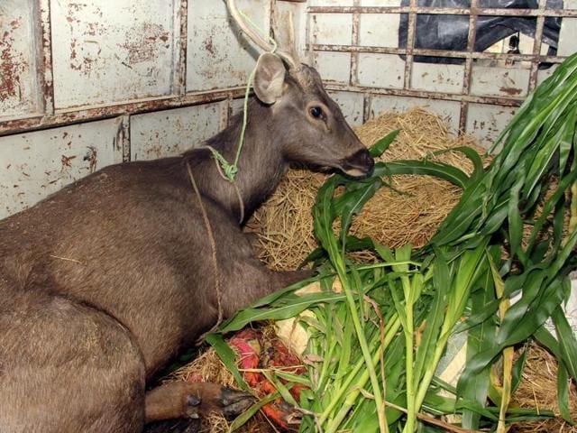Deer safari,GADVASU,injured