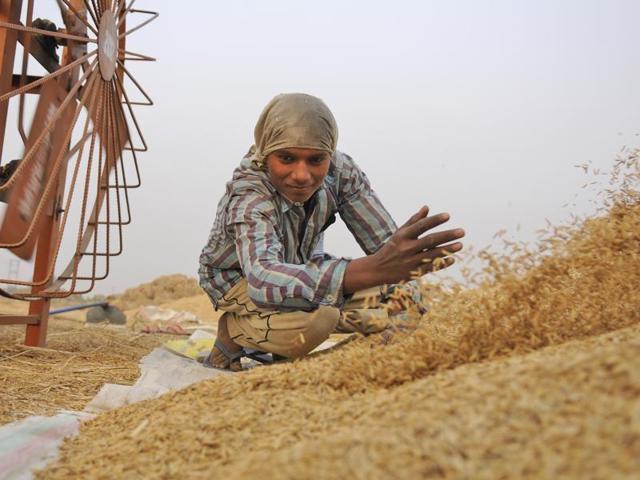 A farmer works in his field in Noida.(Burhaan Kinu /HT Photo)