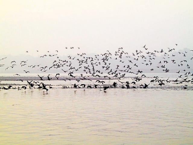 Migratory birds flock at a water body in Uttarakhand.