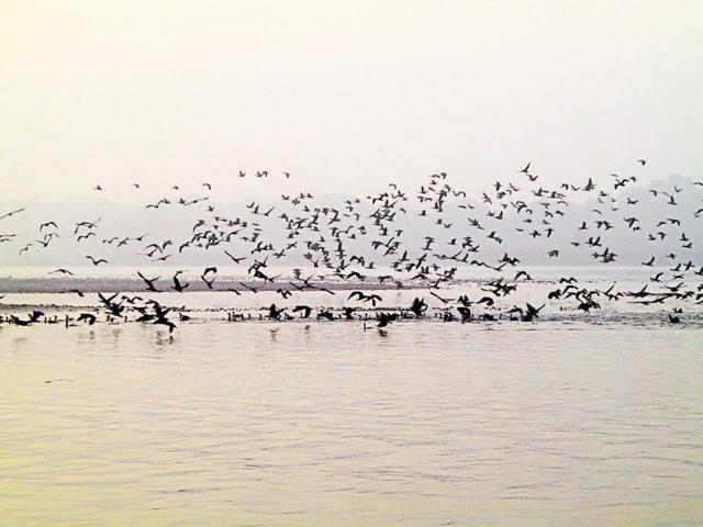 Migratory birds flock at a water body in Uttarakhand.