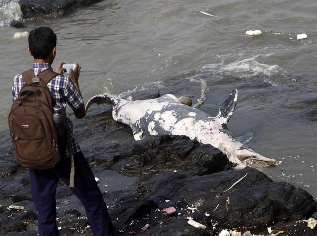 The six-and-a-half-foot Indo-Pacific humpback dolphin was wedged between rocks and was spotted around 11.30am during high tide, said the members of the local fishing community.