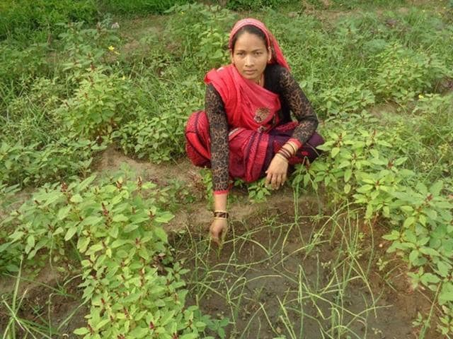 Guddi Singh successfully implemented the idea of using azolla, a fern that acts as bio-fertiliser, to increase productivity of land.