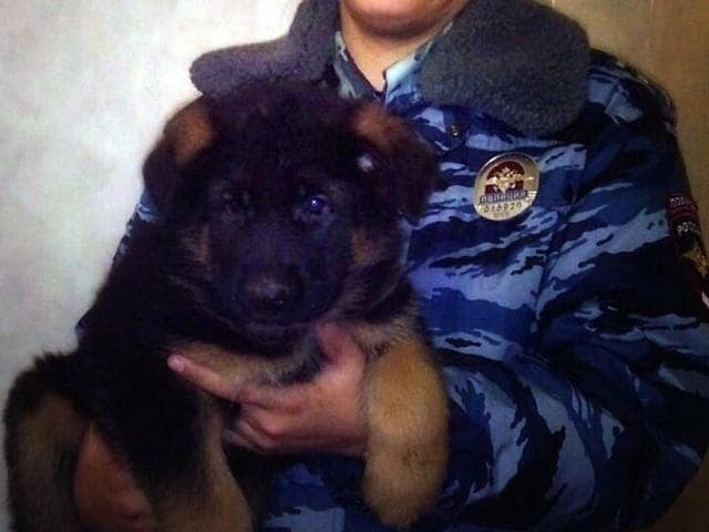 This handout picture released by Russia's Interior ministry shows a Russian officer holding the puppy named Dobrynya in Moscow.