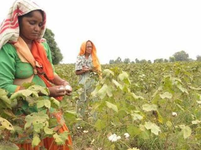 The government had in October announced compensation of Rs 64 crore for labourers, mainly cotton pickers.