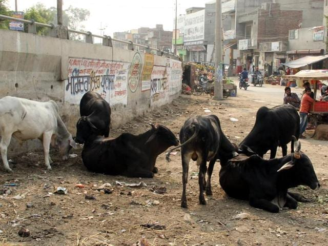 According to some social workers, the number of stray cattle in the district could be around or above 10,000.
