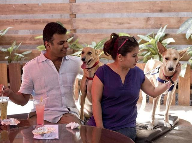 Launched a couple of years ago, Mutt Hutt, a pop-up pet café's tagline reads 'humans allowed'