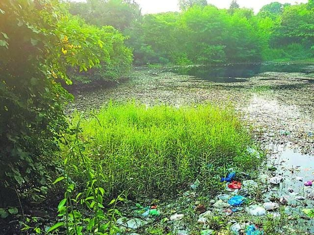 The Aarey Colony lake is full of construction debris.