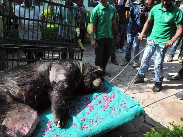 Himalyan black bear,Indore bear euthanised,Indore zoo euthanised