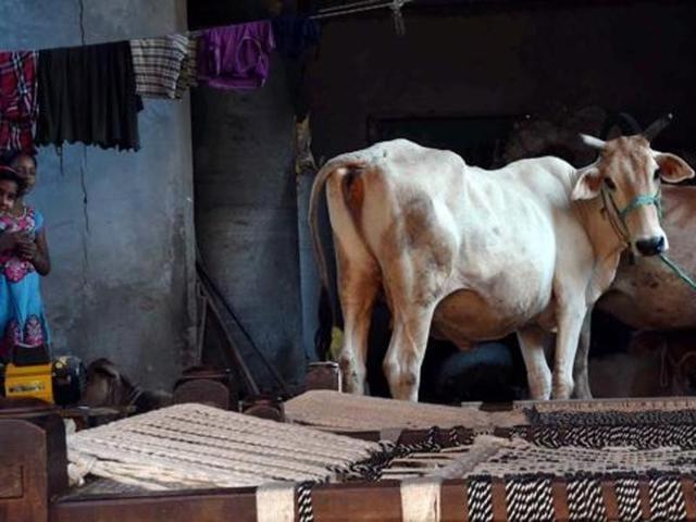 Dadri lynching,cow slaughter,Danish