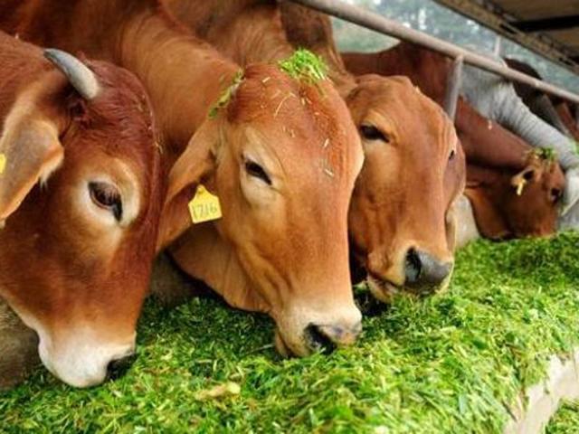 'Cow vigilante' team shoots dead migrant in Karnal