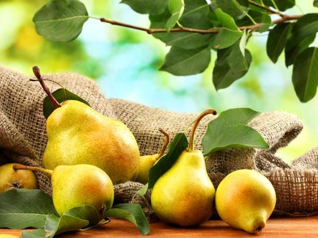 Pears control stomach related diseases involving H. pylori, the most common chronic bacterial infection in humans.