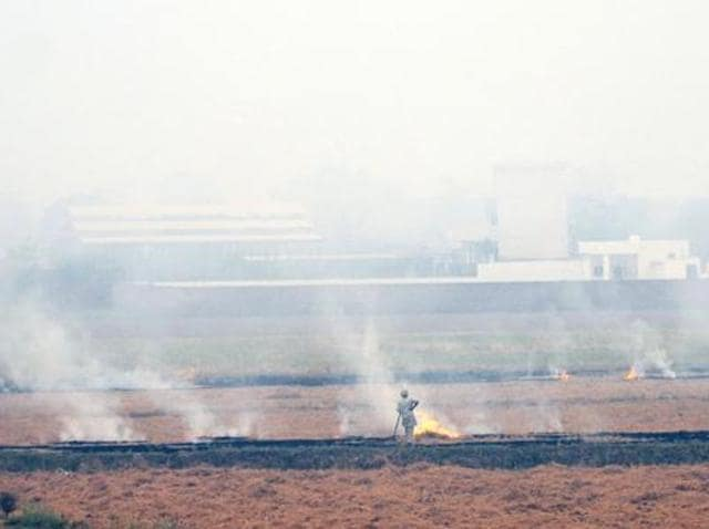 """In the case of persistent defaulters of crop residue burning, an appropriate coercive and punitive action could be taken by the state government,"" the NGT bench said."