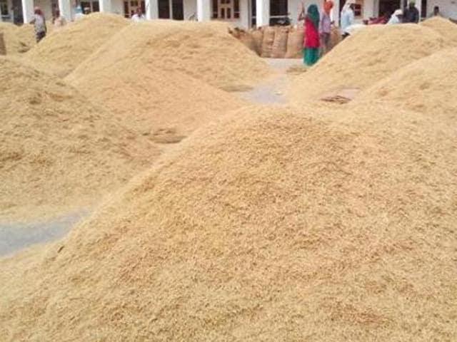 paddy,Punjab,CAG