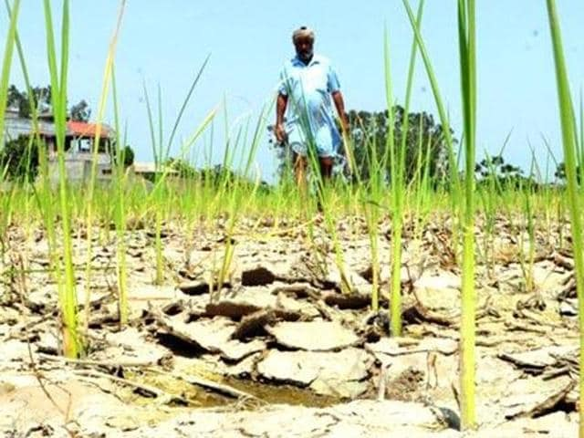 Punjab chief minister Parkash Singh Badal had then directed the revenue department to come out with a viable policy for the disbursal of relief to farm labourers in case of 'natural calamities' in future.(HT Photo)