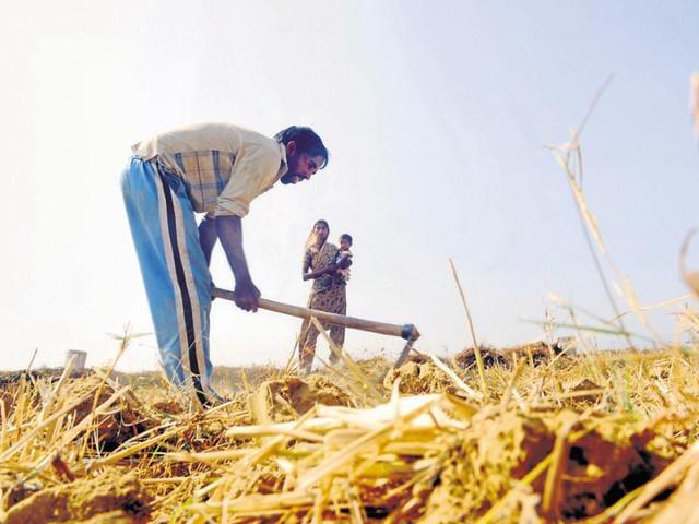 Jharkhand news,drought,crop loss