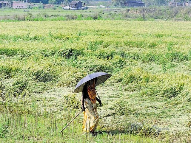Gender equality,Women farmland owners,Agriculture