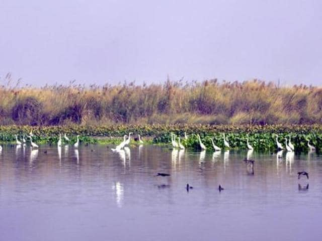 Punjab government has planned to introduce amphibious vehicles which can run both on water and land at Harike wetlands.