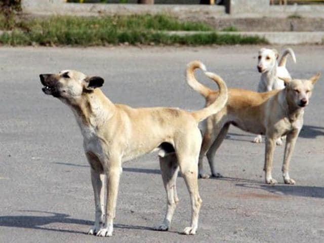 North Delhi Municipal Corporation recorded a total of 37,915 cases of dog bites followed by East Corporation with 24,802 and South Corporation with 1,816 cases upto November 31 this year.