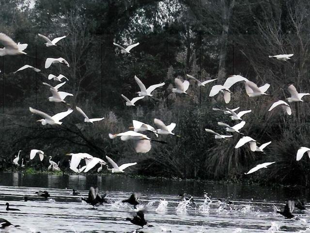 Harike Wildlife Sanctuary,Ferozepur,Kapurthala