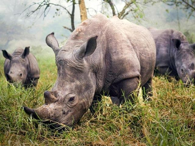 Assam Rifles jawan poacher,Jwana among poacher band,Rhino Poaching in India