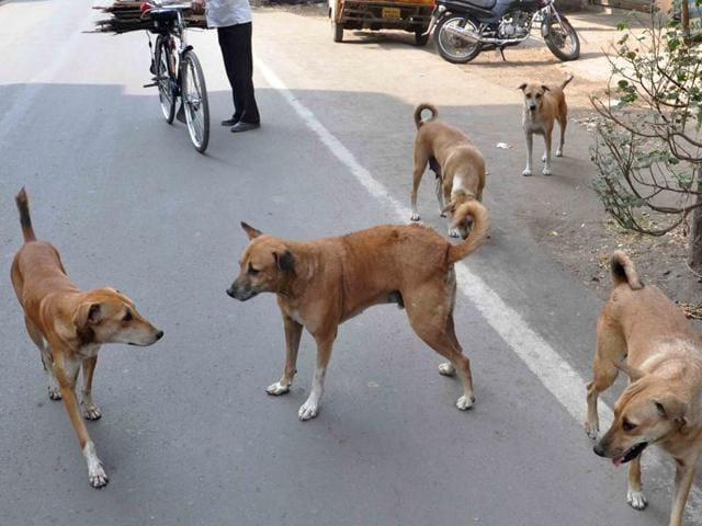 Dog bite cases are on the rise in the city.