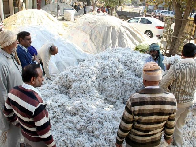 Good prices,Cotton farmers,Ehitefly-hit farmers