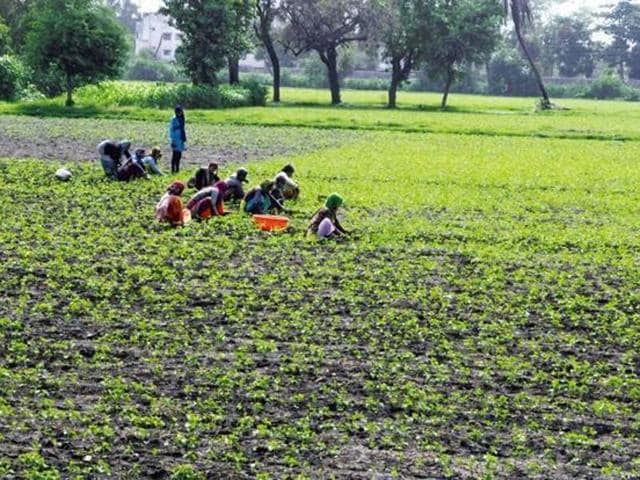 Farmers,Crop protection,Tips