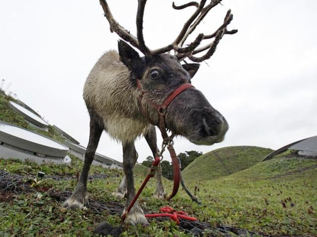 """US Department of Agriculture said in a statement issued on Thursday it was allowing """"S. Claus of the North Pole, broker of Worldwide Gifts,"""" to skip routine disease-transmission screening for live animals entering the United States.(AP File)"""