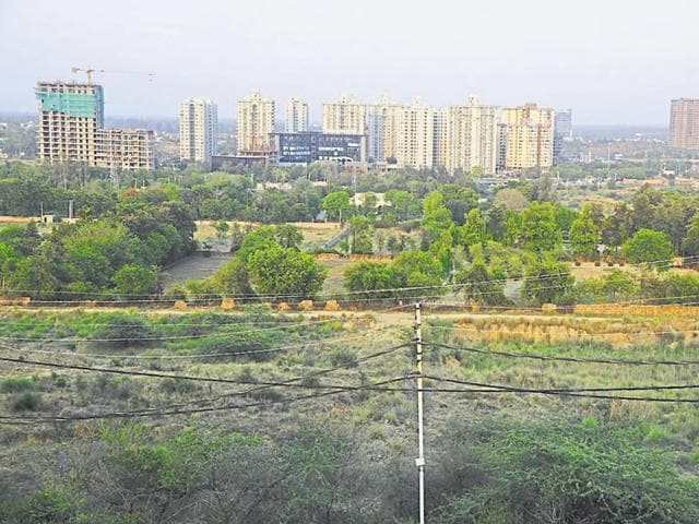 According to the estimates of the forest department, Gurgaon will soon have less than 1% forest cover.